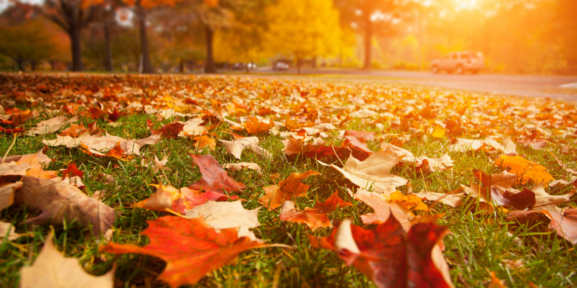 Yellow, orange and red autumn leaves in beautiful fall park.